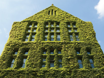 University of Manchester building covered in green ivy
